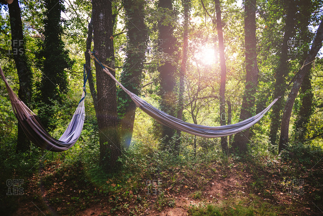 Two hammocks hanging from trees in the forest