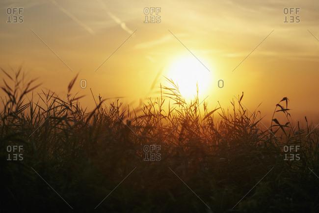 Idyllic sunset over rural field