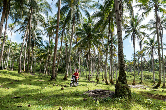 Man driving a motorbike between palm trees in Siargao, Philippines