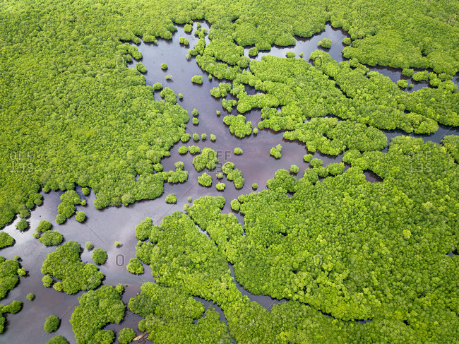 Aerial view of mangroves in Siargao, Philippines