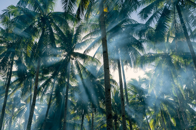 Palm trees in smoke with sun rays in Siargao, Philippines