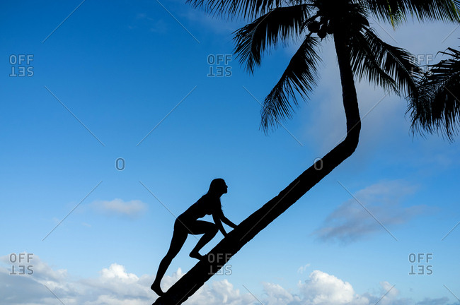 Silhouette of a woman climbing coconut palm tree trunk