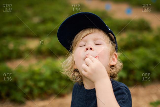 Toddler boy eating strawberries while picking them