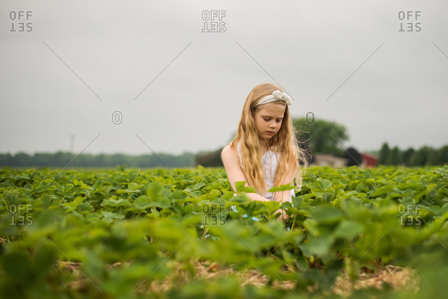 Blonde girl picking strawberries under dark cloudy sky