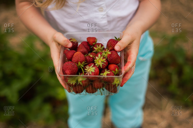 Close up of a little girl showing container of strawberries she picked