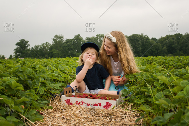 Two kids picking and eating strawberries