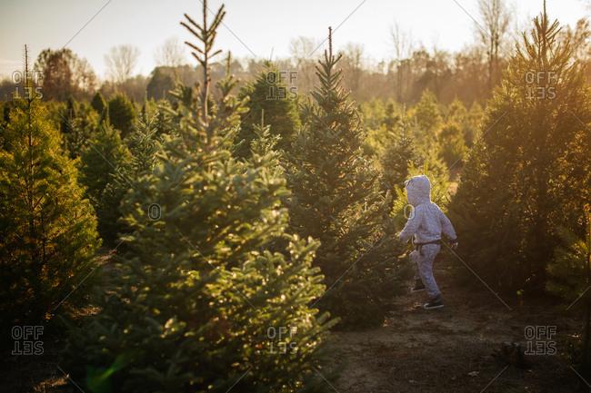 Boy walking through tree farm at Christmas time