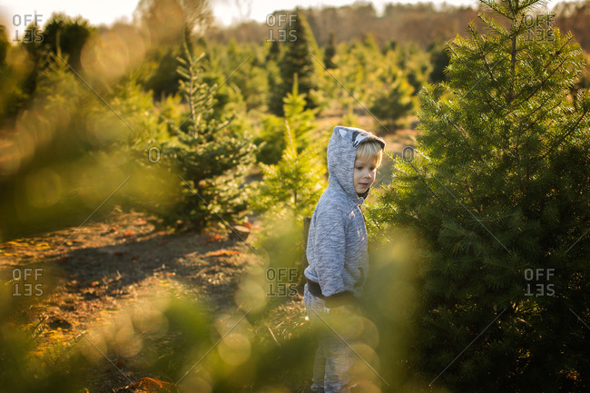 Toddler boy on a tree farm at Christmas time