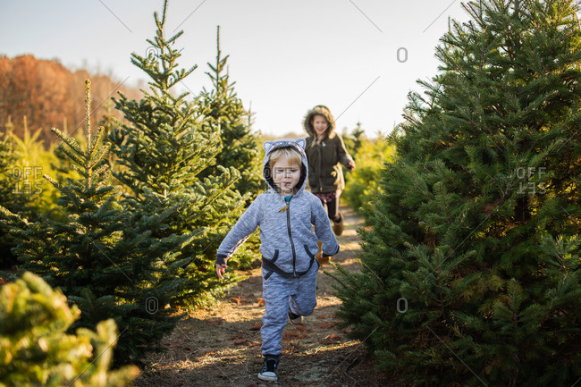 Girl chasing little brother through a Christmas tree farm