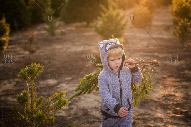 Toddler boy walking with cut branches on a tree farm at Christmas time