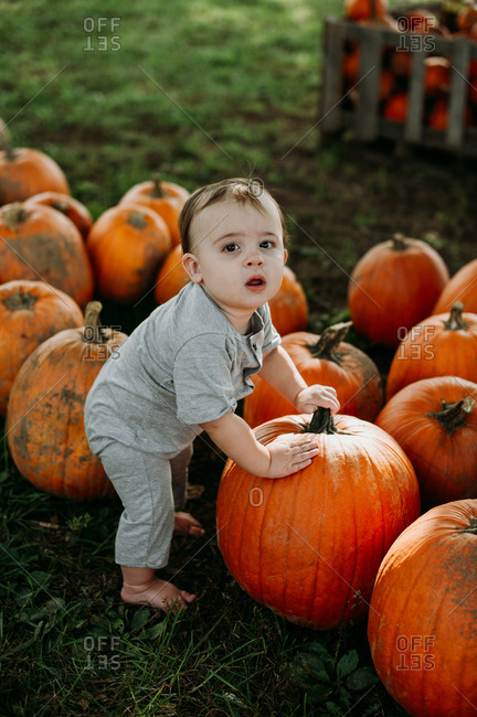 Baby picking pumpkin at a pumpkin patch
