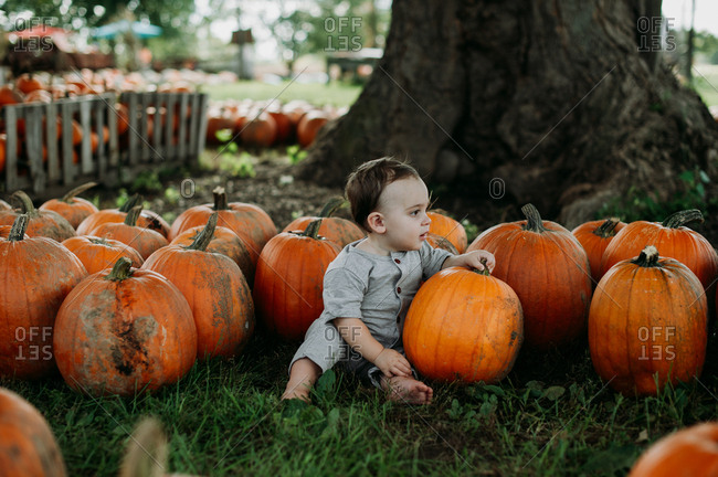 Baby sitting with pumpkins at a pumpkin patch