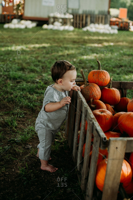 Baby looking at pumpkins at a pumpkin patch