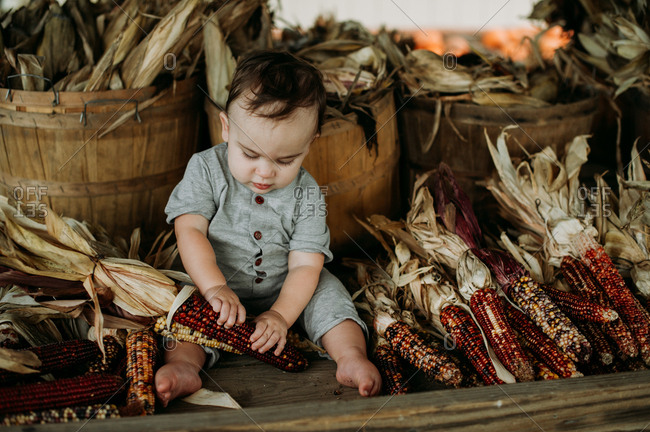 Baby looking at flint corn