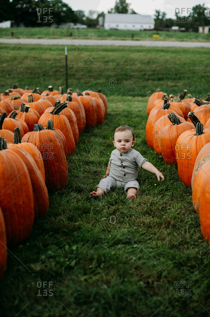 Baby sitting in a field with pumpkins in a pumpkin patch