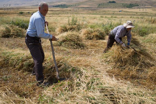 Two farmers working in a field
