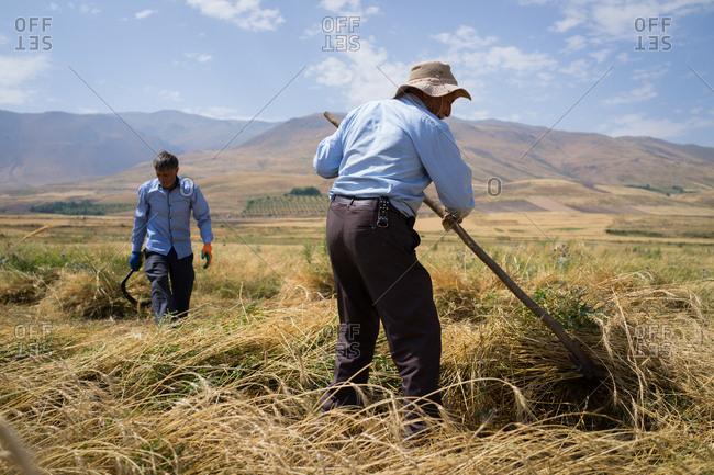 Farmers working in a rural field