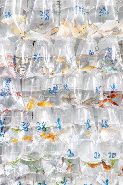 China- Hongkong- Goldfish Market- goldfish in plastic bags for sale