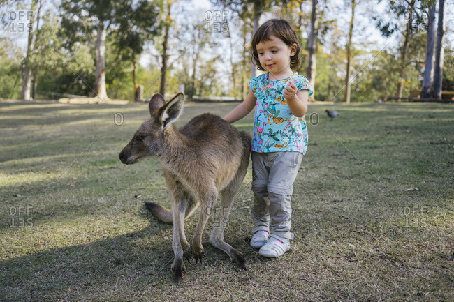 Australia- Brisbane- portrait of little girl stroking tame kangaroo