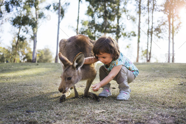 Australia- Brisbane- little girl feeding kangaroo