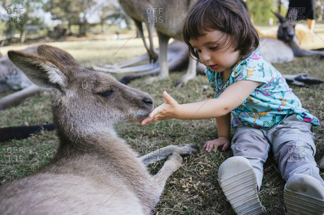 Australia- Brisbane- little girl feeding tame kangaroo