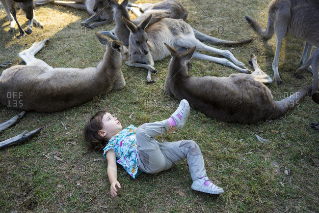 Australia- Brisbane- little girl lying on a meadow with group of tame kangaroos