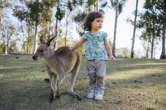 Australia- Brisbane- little girl stroking  tame kangaroo