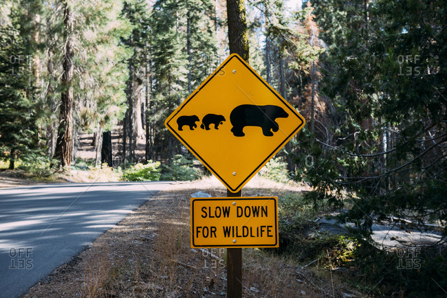 USA- California- Sequoia Natioal Park- Animal Crossing Sign- family of mum and baby bears
