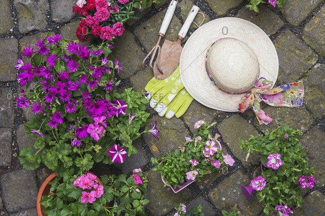 Various potted spring and summer flowers- straw hat- gardening tools and gloves on cabblestone pavement