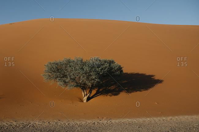 Namibia- Namib desert- Namib-Naukluft National Park- Sossusvlei- Dune 45