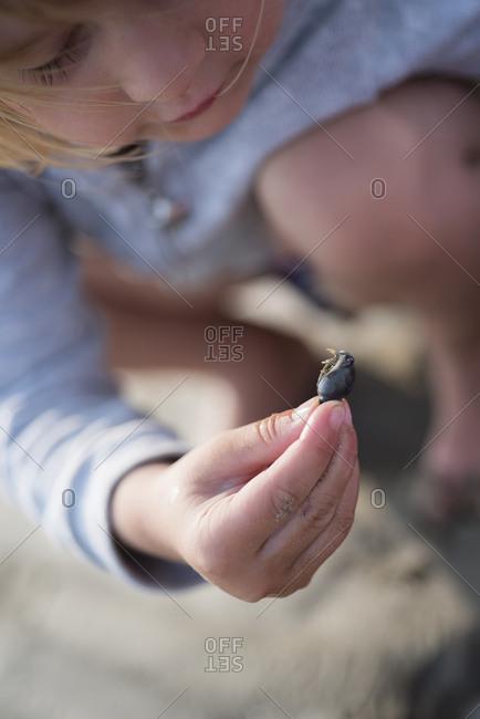 Little girl examining a seashell on the beach