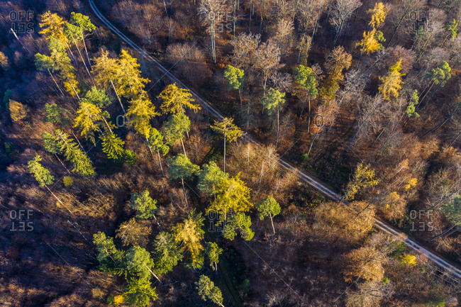 Germany- Baden-Wuerttemberg- Swabian forest- Nassach Valley- Aerial view of forest in autumn