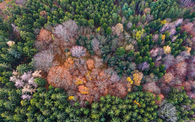 Germany- Baden-Wuerttemberg- Swabian forest- Fils Valley- Aerial view of forest in autumn