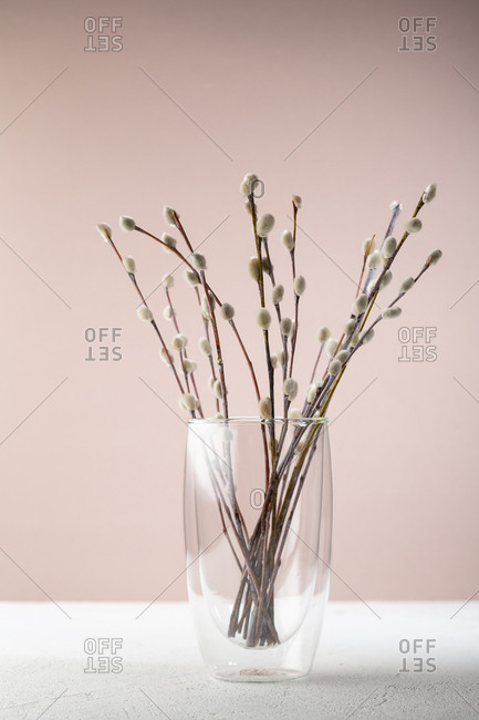 Pussy willow in vase glass