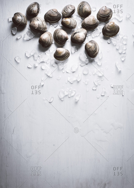 Fresh clams on a white table