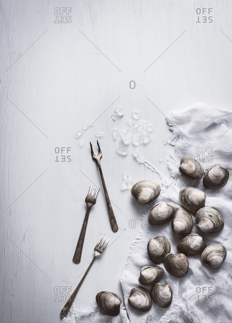 Overhead view of clams on a white table