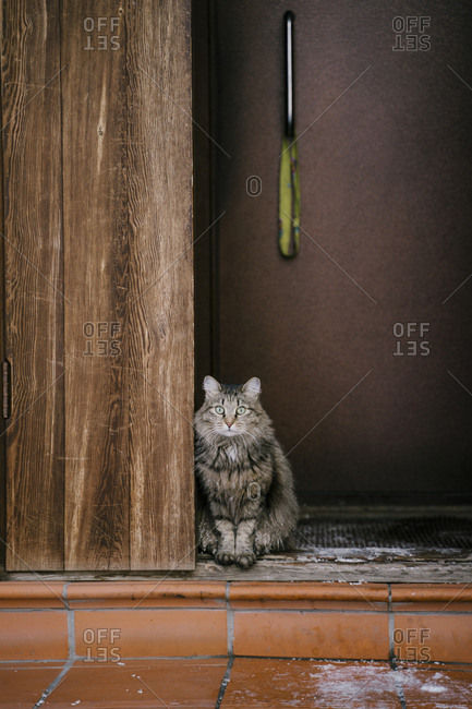 The cat sits at the entrance of the house in the winter in the village