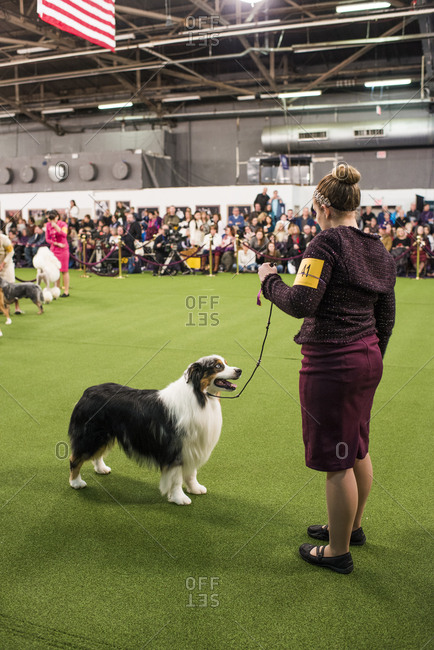 New York City, USA -February 11, 2019: Westminster Dog Show, New York City.