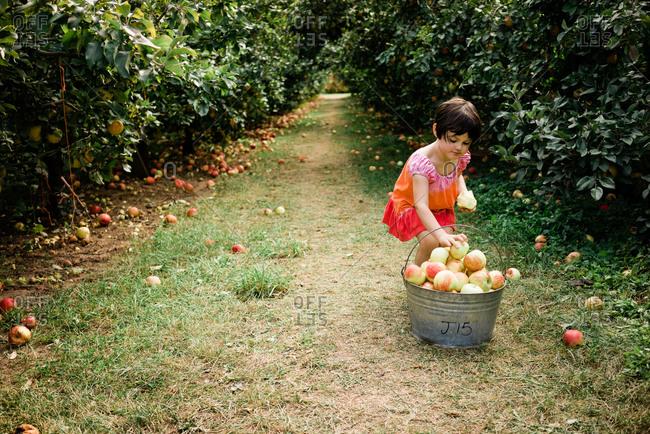 Little girl wearing tie-dye dress eating an apple in an apple orchard