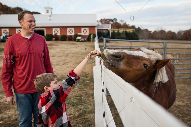 Boy feeding a horse