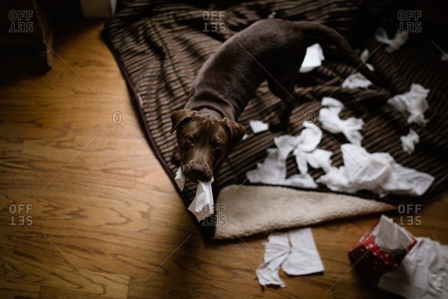 Cute dog making a mess at home