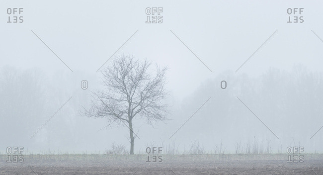 Bare tree surrounded by fog