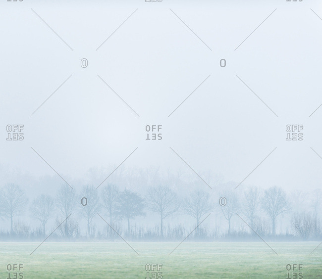 Foggy field and trees in the early morning