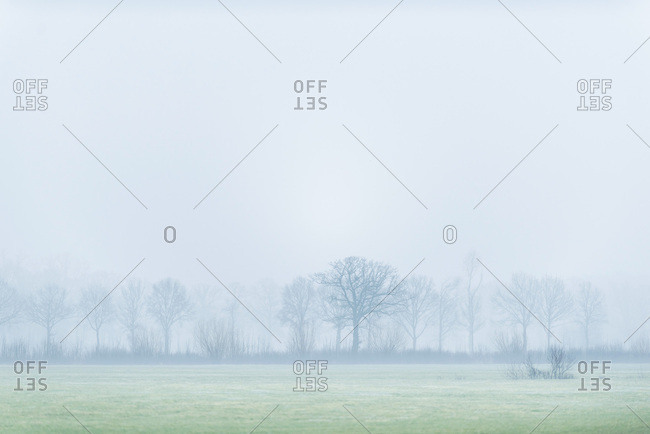 Foggy field and trees
