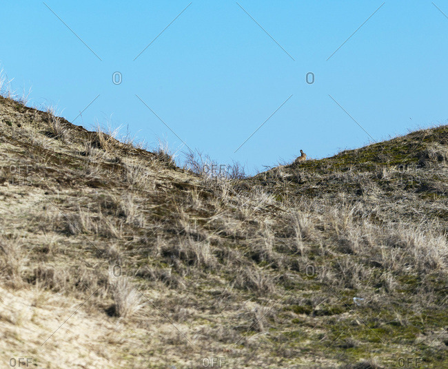 Rabbit on top of a hill