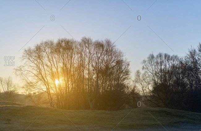 Sun rising behind bare trees in winter