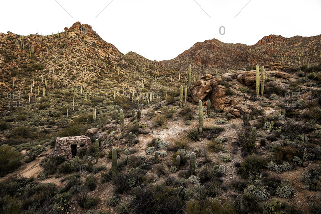 Landscape with multiple hills and cacti and bushes.