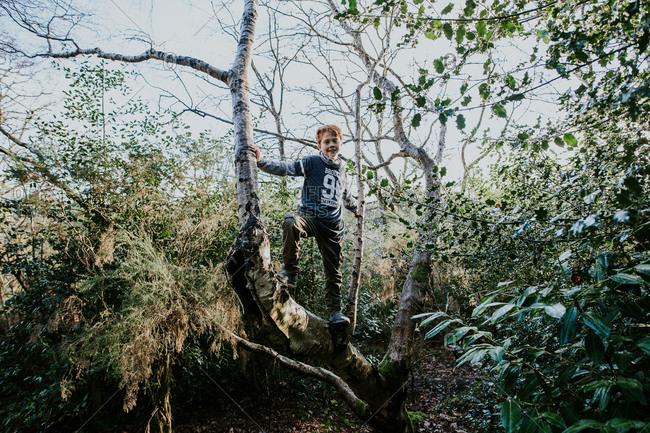 Boy climbing a fir tree in the forest