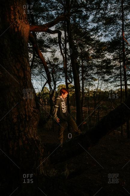 Young redhead boy climbing on tree branch