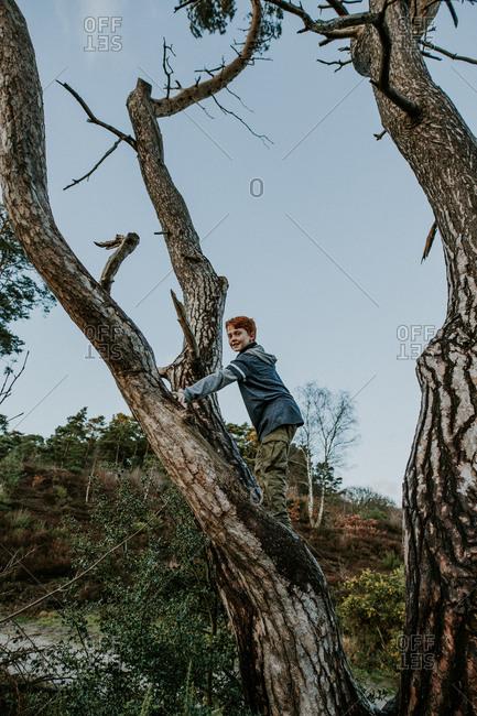 Young redhead boy climbing a fir tree